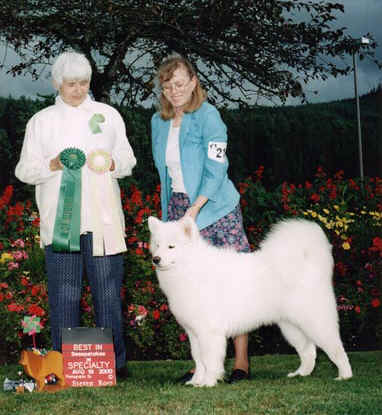 Best Puppy in Sweepstakes  SCWS 2000